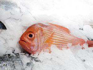 Правила хранения соленой, сушеной и вяленой рыбы в холодильнике