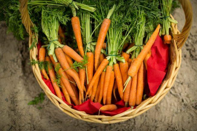 Морковь для хранения на зиму:лучшие сорта