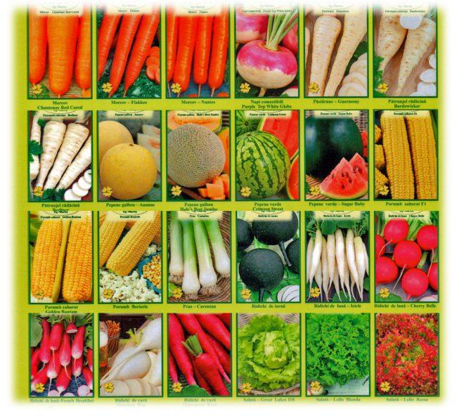 Срок годности семян разных овощных культур